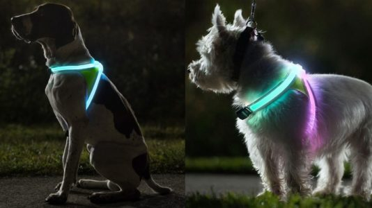 Noxgear LightHound, arnes con iluminacion led para perros