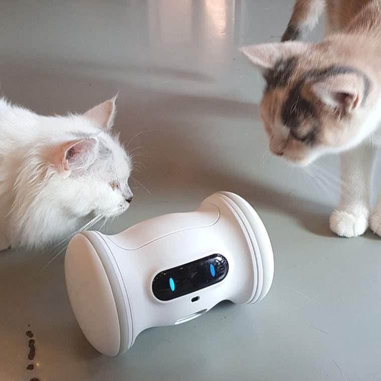 Varram Pet Fitness, el robot para mantener a nuestras mascotas en forma