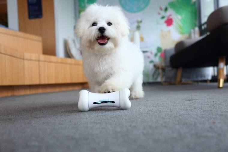 WickedBone, juguete interactivo en forma de hueso para tu perro