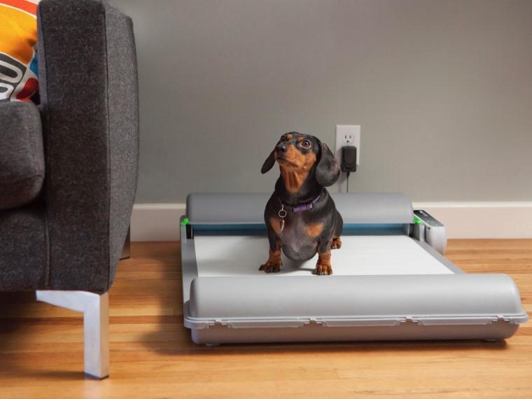 BrilliantPad, wc para perros